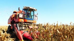 Zamyka w górę, widok zbierać proces kukurydzany pole w wczesnej jesieni duża czerwona syndykata żniwiarza maszyna zbiera kukurudz zdjęcie wideo