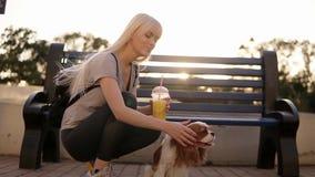 Zamyka w górę widoku długa z włosami blondynki kobieta w ciemnych leggings i czarnym backbag squating, pieści spaniela blisko zbiory