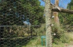 Zamyka w górę widoku elektryczny ogrodzenie zdjęcia royalty free