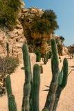 Zamyka w górę widoku na kaktusowych prickles obraz stock