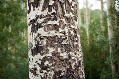 Zamyka w górę widoku osiki barkentyna obrazy royalty free