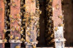 Zamyka w górę widoku pracujące pszczoły Obrazy Stock