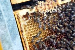 Zamyka w górę widoku pracujące pszczoły na miodowych komórkach Obrazy Royalty Free