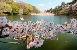 Zamyka w górę widoku wibrujący czereśniowi okwitnięcia na gałąź Sakura drzewo pięknym jeziorem na słonecznym dniu w Omiya parku zdjęcia royalty free