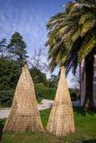 Zamyka w górę widoku zakrywająca palmowa roślina z drewnianym bambusowym protectio fotografia stock