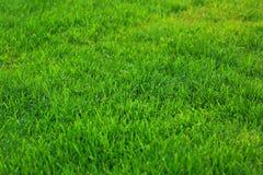 Zamyka w górę widoku zielonej trawy gazon Zielona tekstura, tło/, Piękny natury zieleni tło Obraz Stock