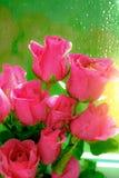 Zamyka w górę wizerunku różowe róże i wod krople po deszczu Hig Zdjęcia Stock
