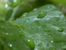 Zamyka w górę wodnych kropelek, raindrops na zielonym liściu/ zdjęcie stock