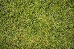 Zamyka w górę zielonego gazonu zdjęcie royalty free