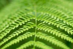 Zamyka w górę zielonego Paprociowego liść natury abstrakta tła Fotografia Stock