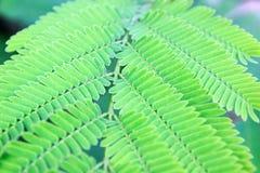 Zamyka w górę zielonych liści deseniowego tła Fotografia Royalty Free