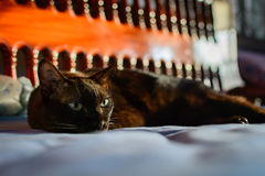zamyka w górę zwierzęcego brown kota dosypiania w łóżku i zaświeca bokeh backgr Zdjęcie Royalty Free