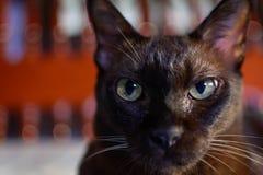 zamyka w górę zwierzęcego brown kota dosypiania w łóżku i zaświeca bokeh backgr Fotografia Royalty Free