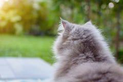 zamyka w górę zwierzęcego Perskiego kota dosypiania w łóżku Zdjęcie Stock