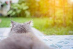 zamyka w górę zwierzęcego Perskiego kota dosypiania w łóżku Zdjęcia Royalty Free
