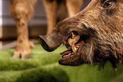Zamyka w górę Zwierzęcego widoku Fotografia Royalty Free