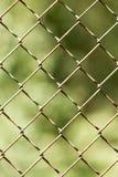 Zamyka w górę deseniowego barbeta drutu Obraz Stock