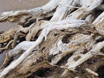 Zamyka w górę driftwood drzewa korzenia Obrazy Royalty Free