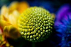 Zamyka w górę fotografii na kwiacie w bukiecie fotografia stock