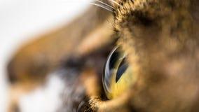 Zamyka w górę fotografii oko kot Zdjęcia Royalty Free