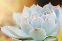 Zamyka w górę makro- zielonego kaktusa Zdjęcie Stock
