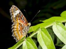 Zamyka w górę motyla 21 Fotografia Royalty Free