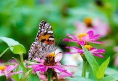 Zamyka w górę motyla na kwiacie, Japonia Zdjęcia Stock