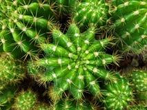 Zamyka w górę odgórnego widoku kaktusa Fotografia Stock