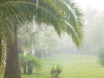 zamyka w górę palm, deszcz, cilento, Italy, Europe Obraz Stock