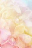 Zamyka w górę storczykowego kwiatu Obrazy Royalty Free