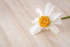 Zamyka w górę trawa kwiatu na drewno stole fotografia stock