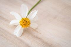 Zamyka w górę trawa kwiatu na drewno stole obraz royalty free