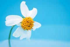 Zamyka w górę trawa kwiatu na wodzie obraz royalty free