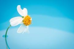 Zamyka w górę trawa kwiatu na wodzie obrazy stock