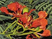 Zamyka w górę widoku czerwony drzewny kwiat zdjęcie stock