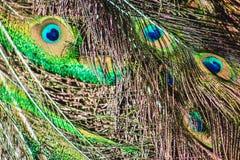 Zamyka w górę widoku Pawi piórka Zdjęcia Royalty Free