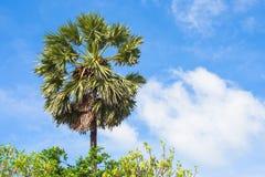 Zamyka w górę zielonego drzewka palmowego przy morzem Zdjęcie Royalty Free