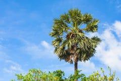 Zamyka w górę zielonego drzewka palmowego przy morzem Obraz Stock