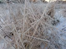 zamyka zamarzniętej trawy zamarznięty Zdjęcie Royalty Free