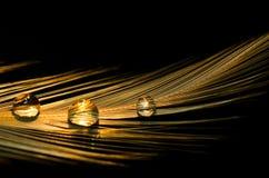 Zamykający W górę kropli woda Na Ptasim piórku Fotografia Stock
