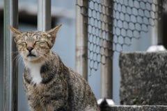 Zamykający kot Zdjęcie Royalty Free