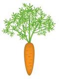 Zanahoria ilustración del vector