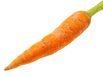 Zanahoria. Imagenes de archivo