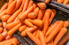 Zanahoria Fotos de archivo libres de regalías
