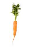 Zanahoria aislada Fotografía de archivo libre de regalías
