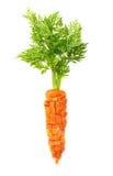 Zanahoria aislada Imagen de archivo libre de regalías