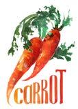 Zanahoria anaranjada Acuarela del dibujo de la mano en el fondo blanco con título stock de ilustración