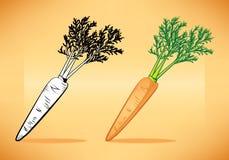 Zanahoria con el top Imagen de archivo libre de regalías