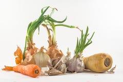 Zanahoria del perejil del ajo de la cebolla Imagenes de archivo