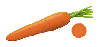 Zanahoria del vector Ilustración del Vector